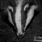 Badgers 10-3-18